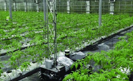 Green Patrol, ingeniería robótica agrícola que se enfrenta a las plagas